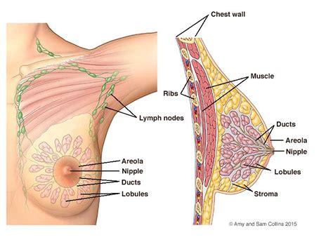 loss of breast tissue jpg 800x600